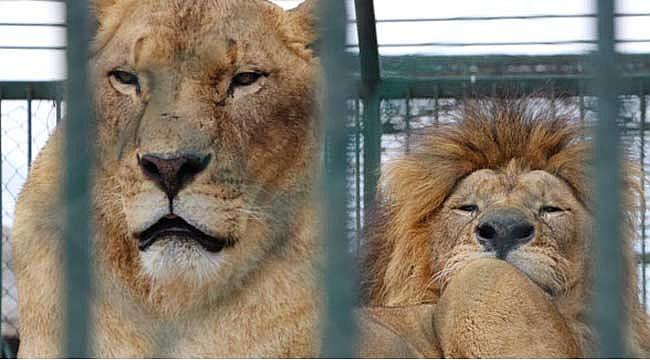 Hayvanat bahçesine 50 kuruş zam yapılınca ziyaretçi azaldı