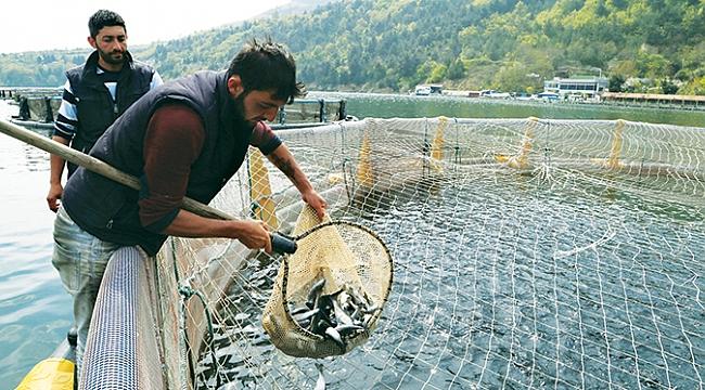 Tezgahlar kültür balıklarıyla canlandı