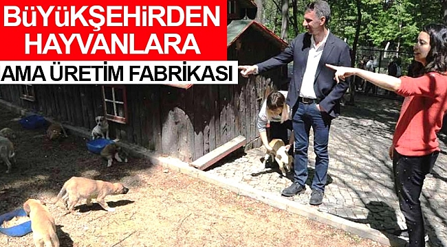 Büyükşehir'den hayvanlara mama üretim fabrikası