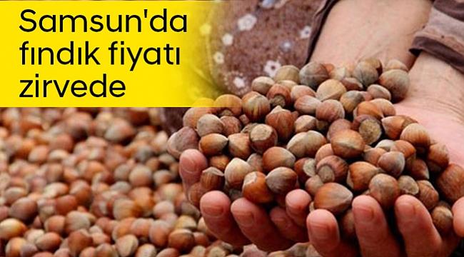 Samsun'da fındık fiyatı zirvede