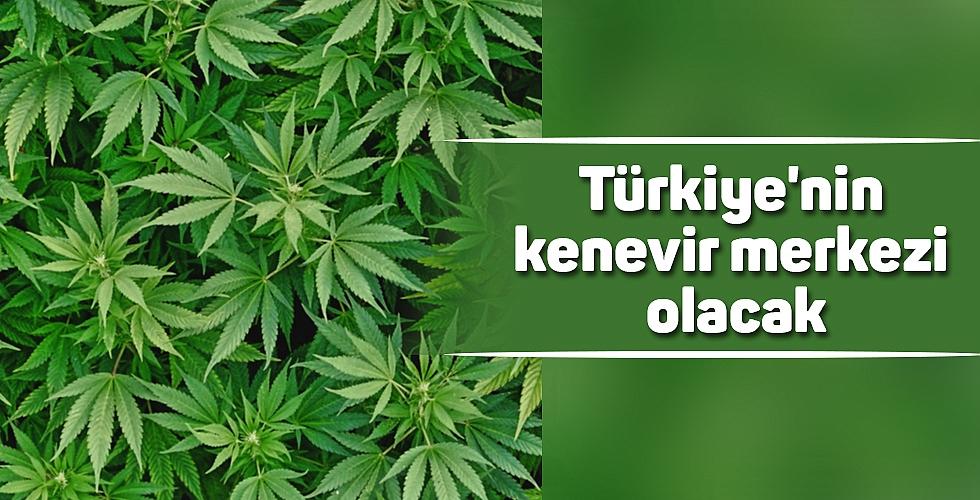 Türkiye'nin kenevir merkezi olacak