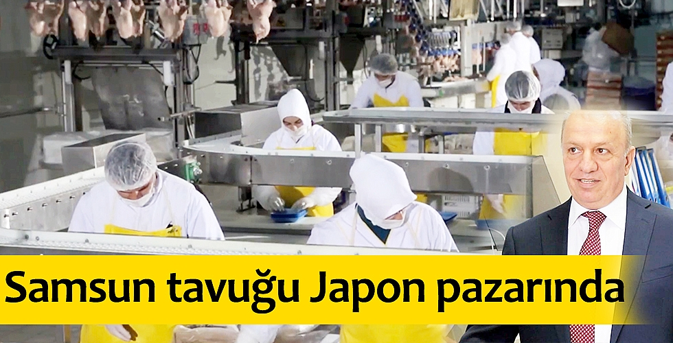 Samsun tavuğu Japon pazarında