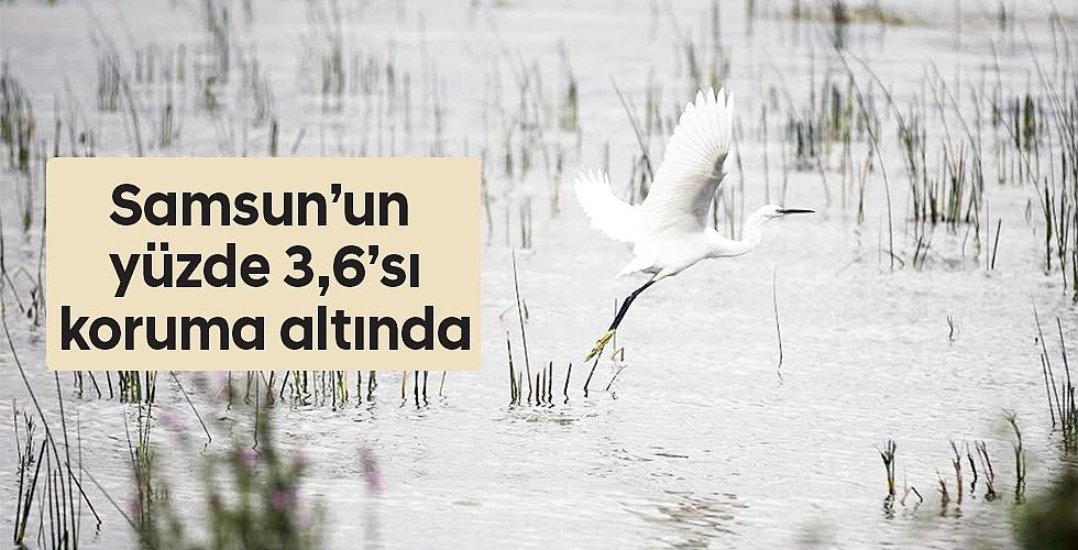 Samsun'un yüzde 3,6'sı koruma altında
