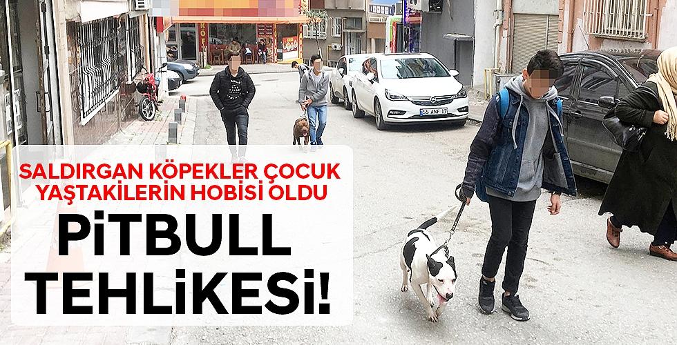 PİTBULL TEHLİKESİ!