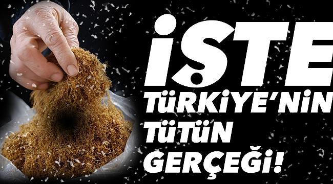 İŞTE TÜRKİYE'NİN TÜTÜN GERÇEĞİ!