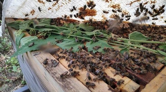 Samsun'da binlerce arı telef oldu