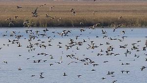 163 bin 434 su kuşu sayıldı