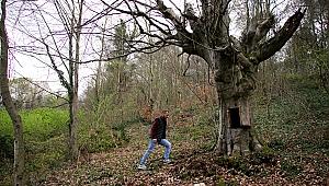 Kuruyan gürgen ağacındaki