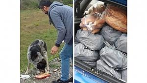 Sokak hayvanlarına destek çağrısı