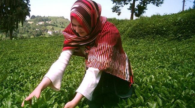 Türk çayı 5,2 milyon dolar kazandırdı