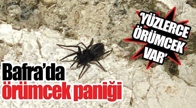 Bafra'da örümcek paniği