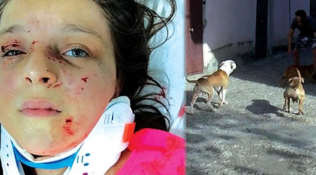 Samsun'da ölümcülköpek satışı sürüyor