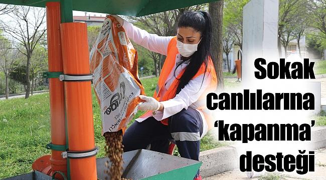 Sokak canlılarına'kapanma' desteği