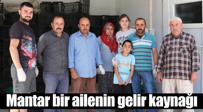 Mantar bir ailenin gelir kaynağı