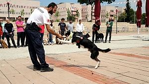 'Köpek Eğitmenliği Eğitimi Sertifika Kursu' düzenlendi