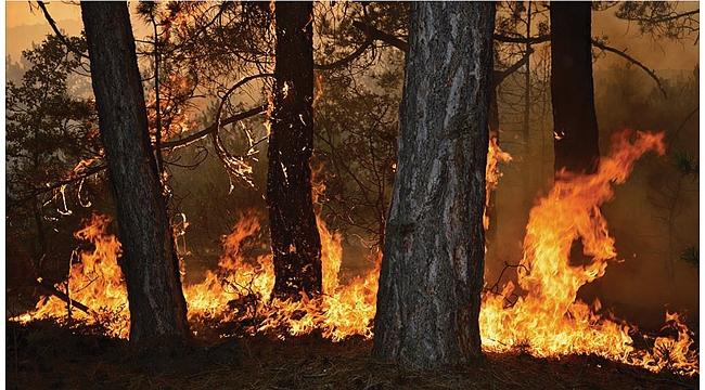 Orman yangını uyarısı