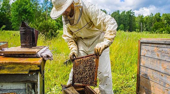 Arı yetiştiricilerine sonbahar uyarısı
