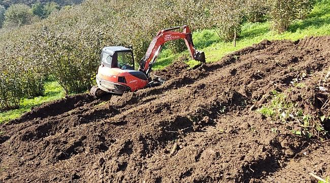 Eski fındık bahçeleri yenileniyor