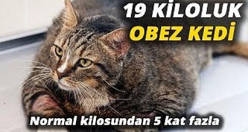 19 kiloluk kediye diyet programı