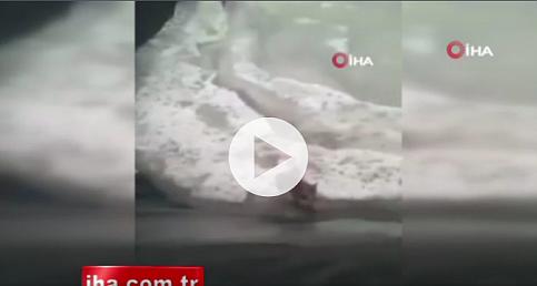 Buz tutmuş havuzda yaşam savaşı
