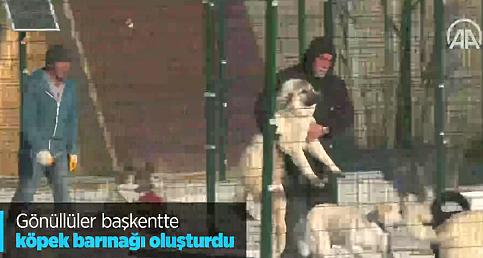 Gönüllüler başkentte köpek barınağı oluşturdu