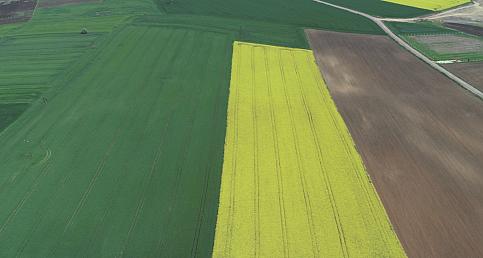 """Trakya'nın """"sarı kızı"""" kanola çiftçiye alternatif ürün oluyor"""